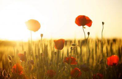 red-flower-near-white-flower-during-daytime-66274